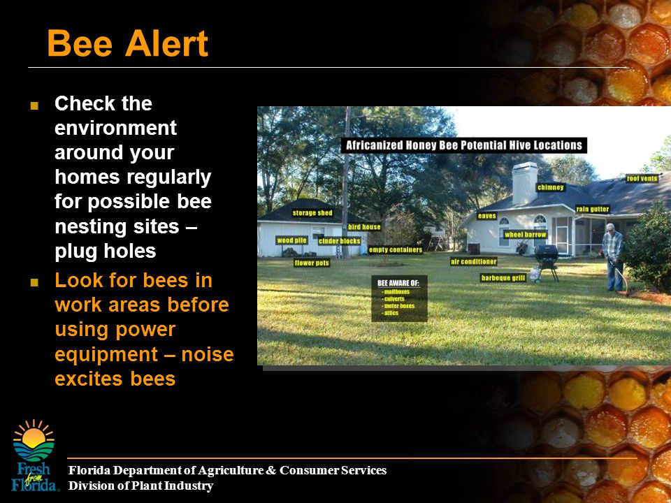 Florida Department of Agriculture & Consumer Services Division of Plant Industry Bee Alert Check the environment around your homes regularly for possible bee nesting sites – plug holes Look for bees in work areas before using power equipment – noise excites bees