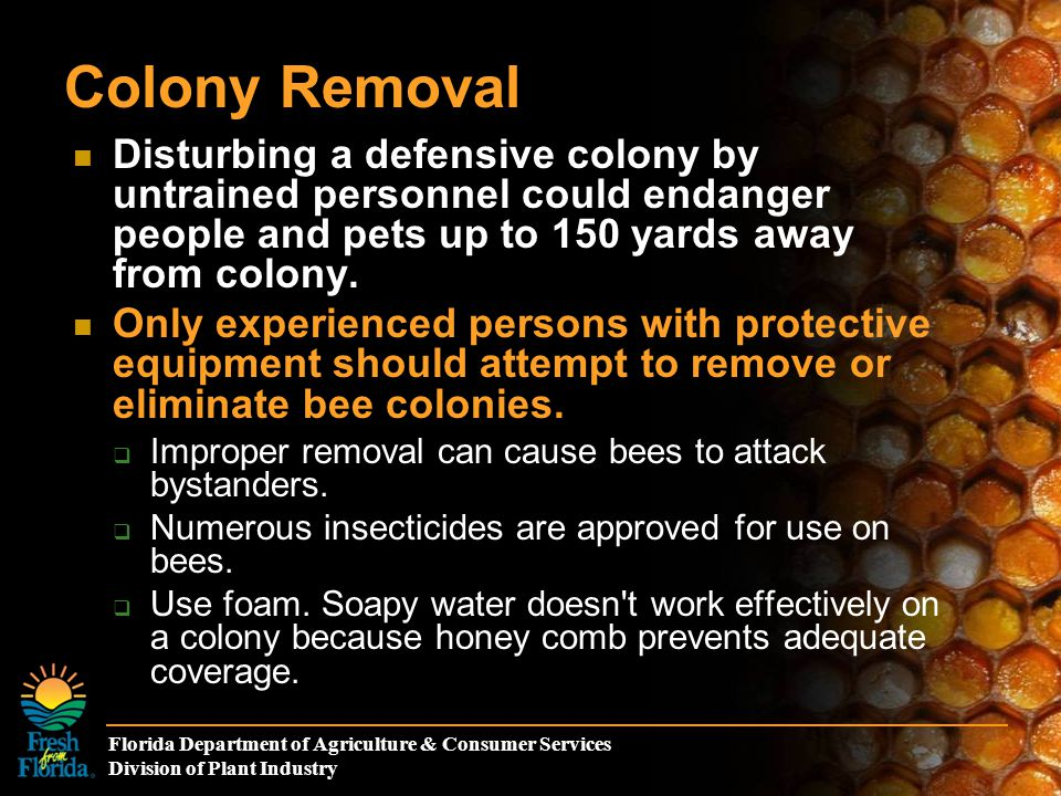 Florida Department of Agriculture & Consumer Services Division of Plant Industry Colony Removal Disturbing a defensive colony by untrained personnel could endanger people and pets up to 150 yards away from colony.
