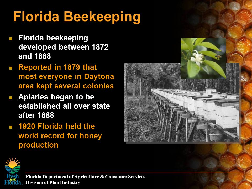 Florida Department of Agriculture & Consumer Services Division of Plant Industry Florida Beekeeping Apiary inspection was created by Legislative Act 1919 250,000 colonies maintained by registered beekeepers (last 3 years) 56,000 colonies inspected from 3,400 apiaries per year