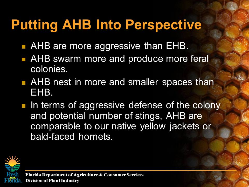 Florida Department of Agriculture & Consumer Services Division of Plant Industry Putting AHB Into Perspective AHB are more aggressive than EHB. AHB sw