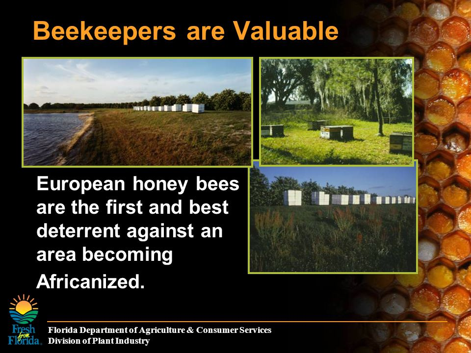 Florida Department of Agriculture & Consumer Services Division of Plant Industry Beekeepers are Valuable European honey bees are the first and best deterrent against an area becoming Africanized.