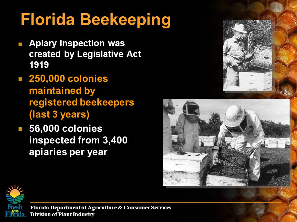 Florida Department of Agriculture & Consumer Services Division of Plant Industry Florida Beekeeping Apiary inspection was created by Legislative Act 1