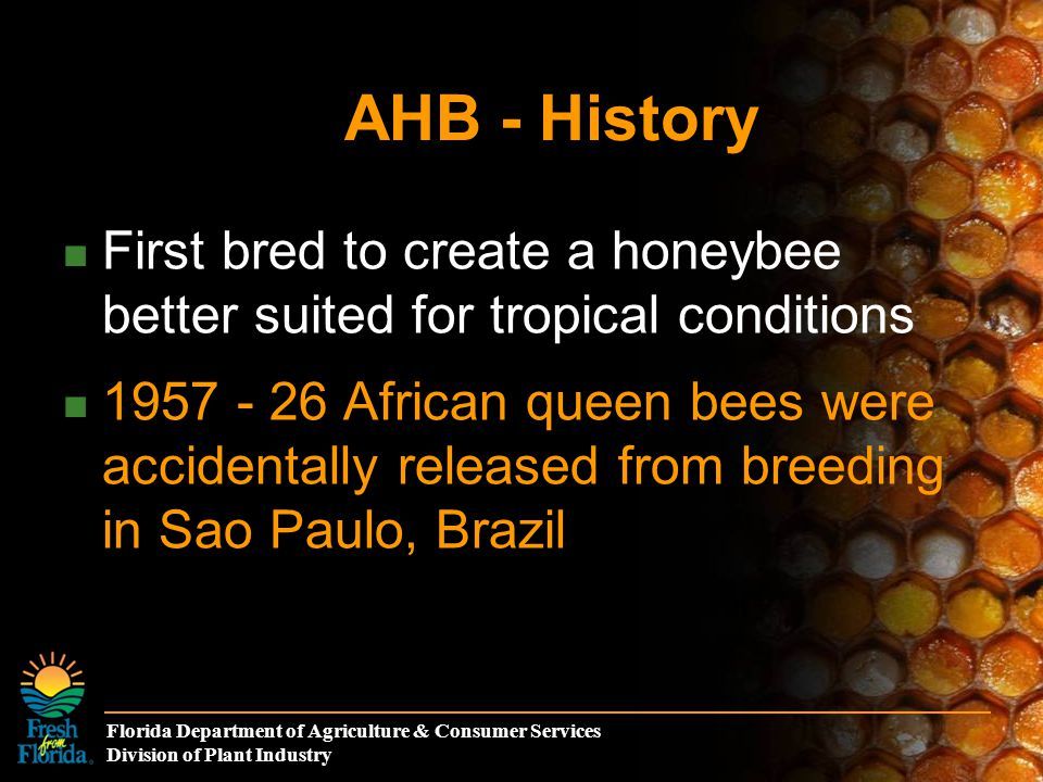 Florida Department of Agriculture & Consumer Services Division of Plant Industry How Africanized honeybees entered Florida