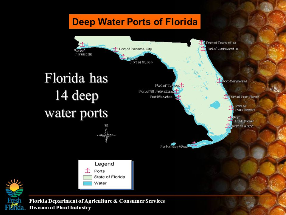 Florida Department of Agriculture & Consumer Services Division of Plant Industry Spread of Africanized Honey Bees from 1990 t0 2006