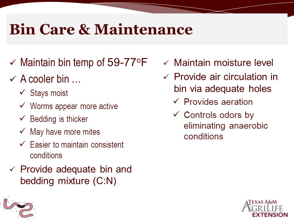 Bin Care & Maintenance Maintain bin temp of 59-77 o F A cooler bin … Stays moist Worms appear more active Bedding is thicker May have more mites Easier to maintain consistent conditions Provide adequate bin and bedding mixture (C:N) Maintain moisture level Provide air circulation in bin via adequate holes Provides aeration Controls odors by eliminating anaerobic conditions