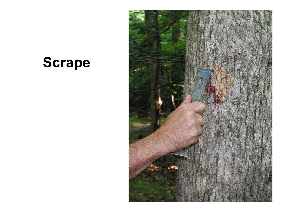Scrape