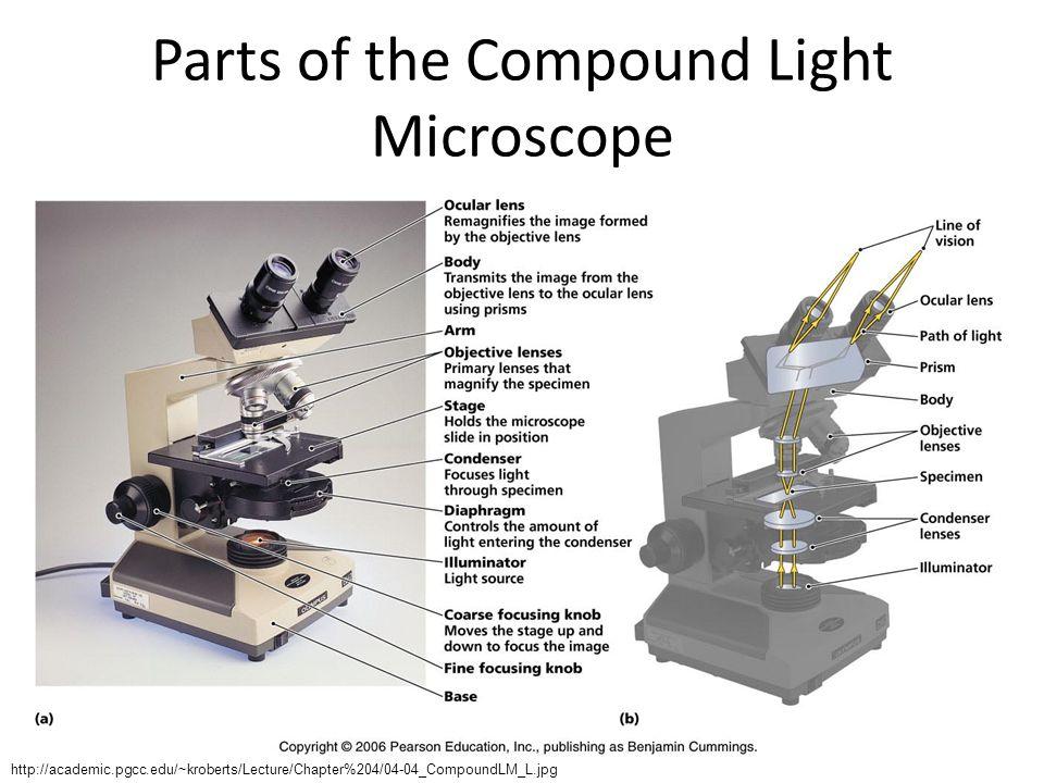 Parts of the Compound Light Microscope http://academic.pgcc.edu/~kroberts/Lecture/Chapter%204/04-04_CompoundLM_L.jpg