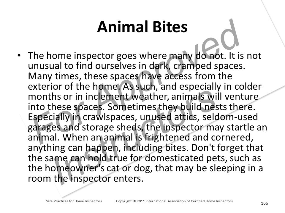 Safe Practices for Home Inspectors Copyright © 2011 International Association of Certified Home Inspectors For Approved Instructors Animal Bites The home inspector goes where many do not.
