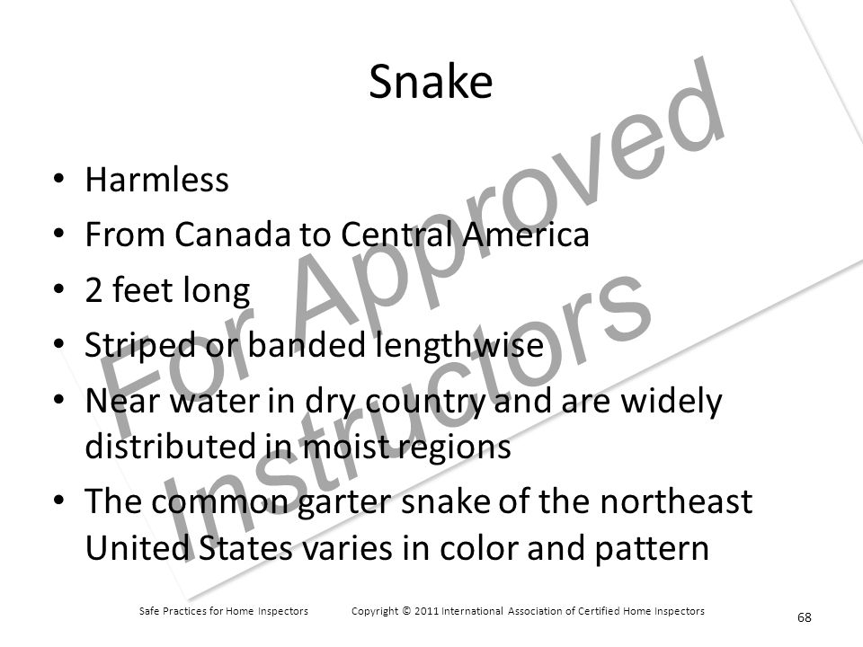 Safe Practices for Home Inspectors Copyright © 2011 International Association of Certified Home Inspectors For Approved Instructors Snake Harmless From Canada to Central America 2 feet long Striped or banded lengthwise Near water in dry country and are widely distributed in moist regions The common garter snake of the northeast United States varies in color and pattern 68