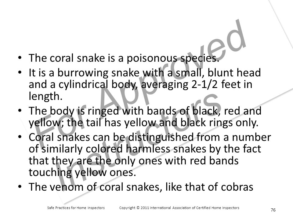 Safe Practices for Home Inspectors Copyright © 2011 International Association of Certified Home Inspectors For Approved Instructors The coral snake is a poisonous species.