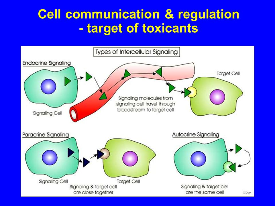 Cell communication & regulation - target of toxicants
