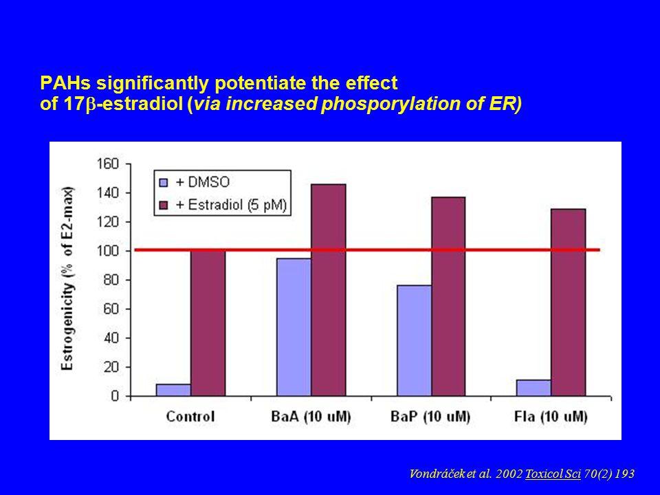 PAHs significantly potentiate the effect of 17  -estradiol (via increased phosporylation of ER) Vondráček et al.