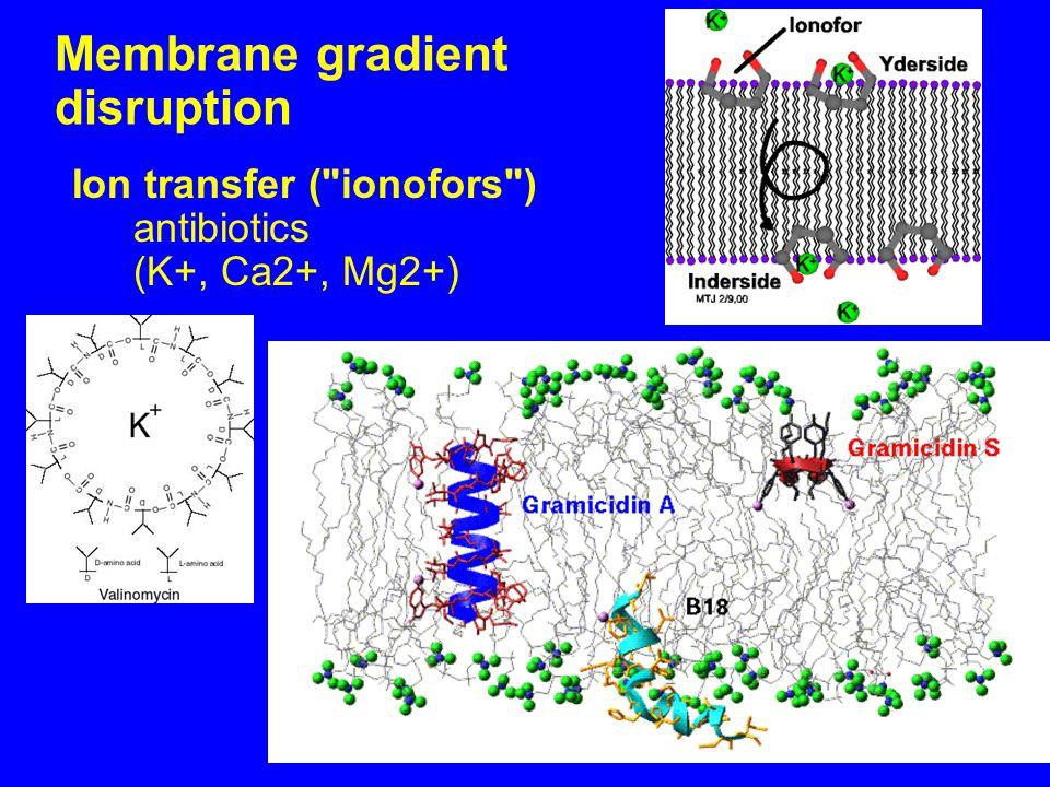 Membrane gradient disruption Ion transfer ( ionofors ) antibiotics (K+, Ca2+, Mg2+)