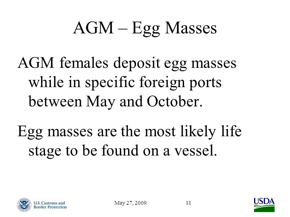 May 27, 200911 AGM – Egg Masses AGM females deposit egg masses while in specific foreign ports between May and October. Egg masses are the most likely