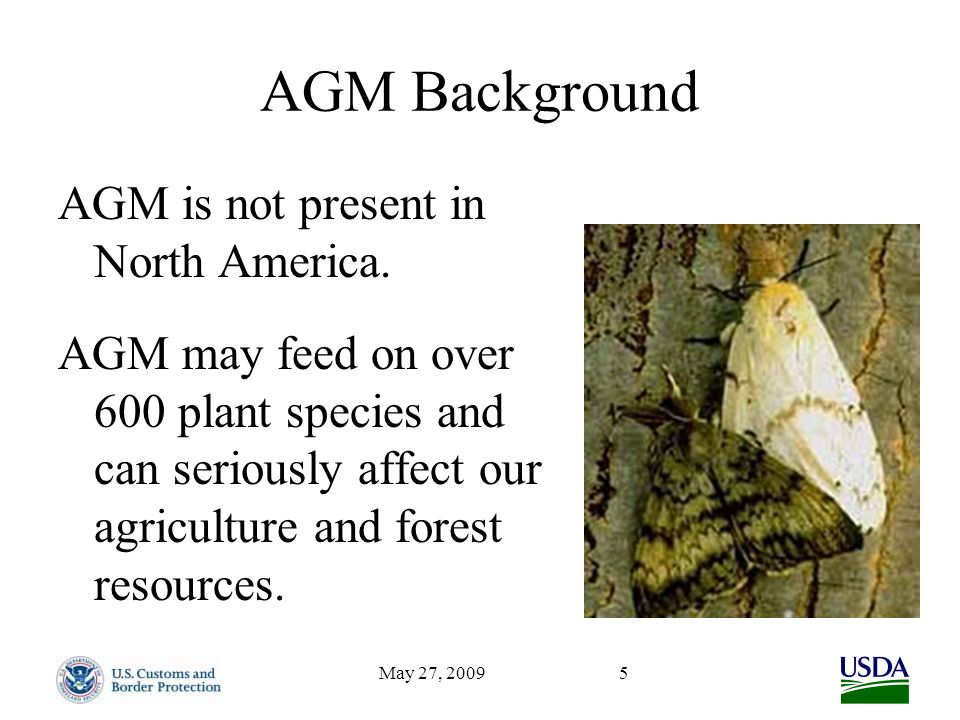 May 27, 20095 AGM Background AGM is not present in North America. AGM may feed on over 600 plant species and can seriously affect our agriculture and
