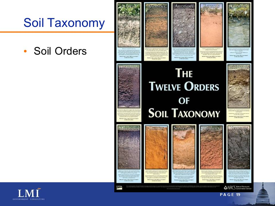 P A G E 19 Soil Taxonomy Soil Orders