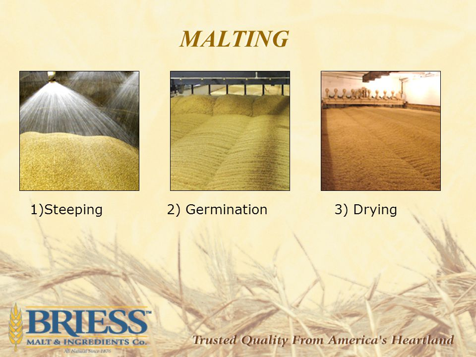 1)Steeping2) Germination3) Drying MALTING