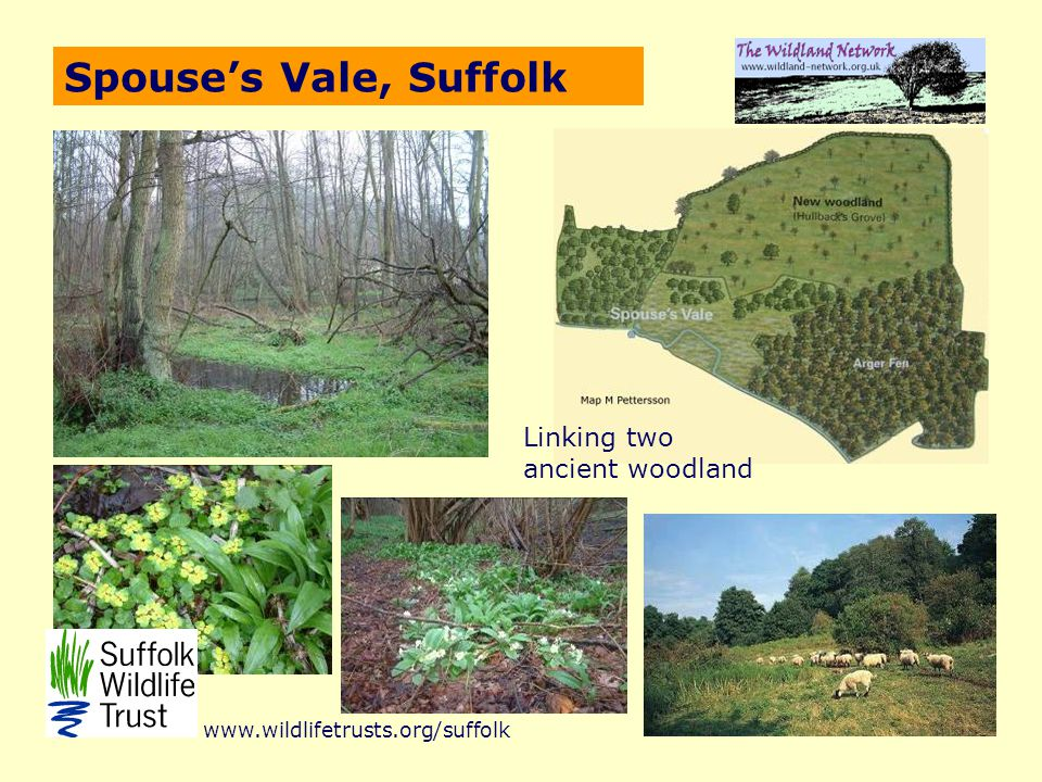Spouse's Vale, Suffolk Linking two ancient woodland www.wildlifetrusts.org/suffolk
