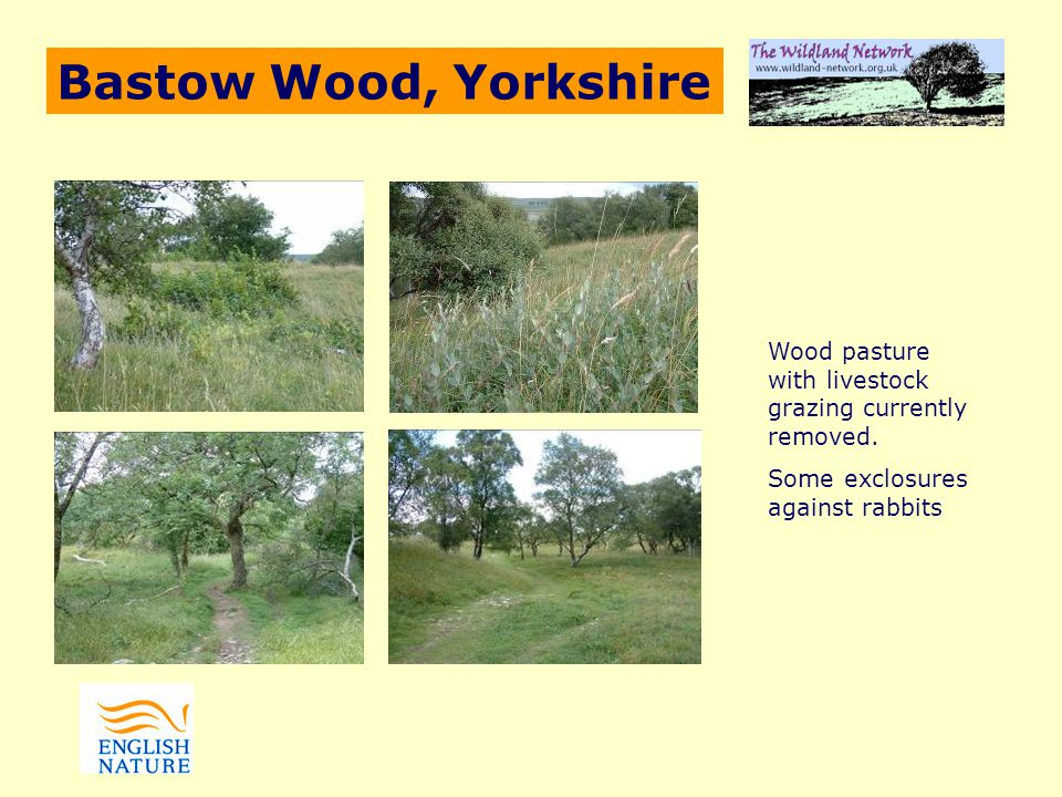 Bastow Wood, Yorkshire Wood pasture with livestock grazing currently removed.