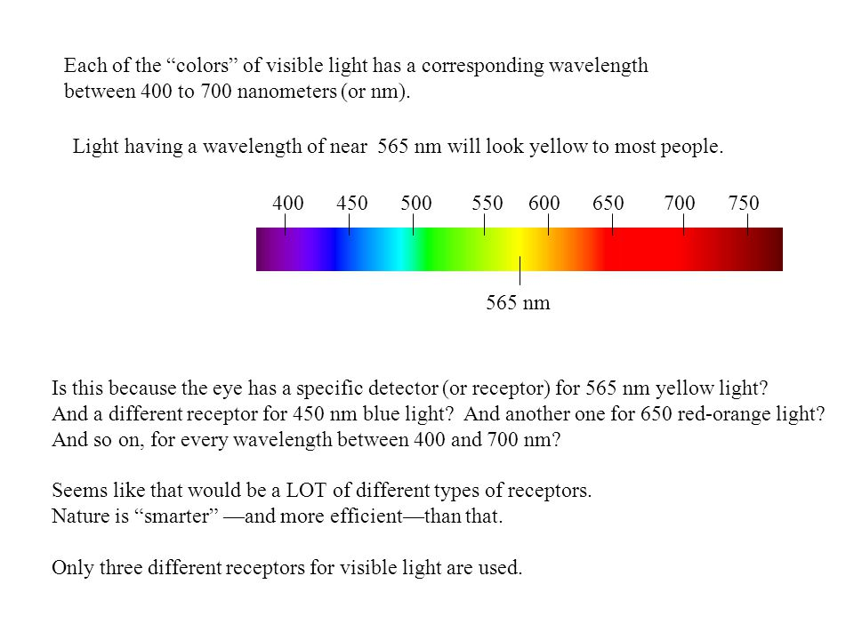 500600700750650550450400 Each of the colors of visible light has a corresponding wavelength between 400 to 700 nanometers (or nm).