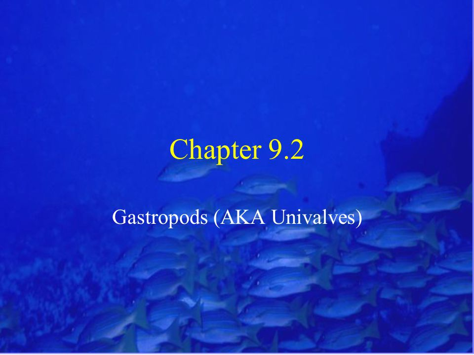 Chapter 9.2 Gastropods (AKA Univalves)
