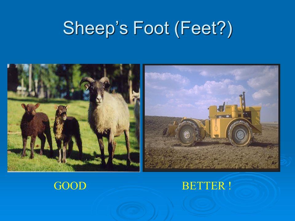 Sheep's Foot (Feet?) GOODBETTER !