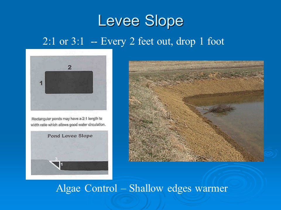 Levee Slope 2:1 or 3:1 -- Every 2 feet out, drop 1 foot Algae Control – Shallow edges warmer