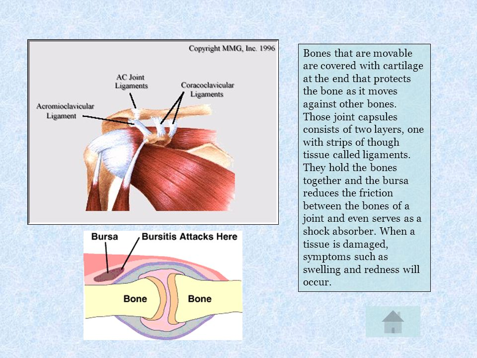Bones that are movable are covered with cartilage at the end that protects the bone as it moves against other bones. Those joint capsules consists of