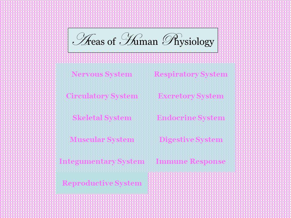 Nervous System Circulatory System Skeletal System Integumentary System Respiratory System Excretory System Muscular System Endocrine System Digestive