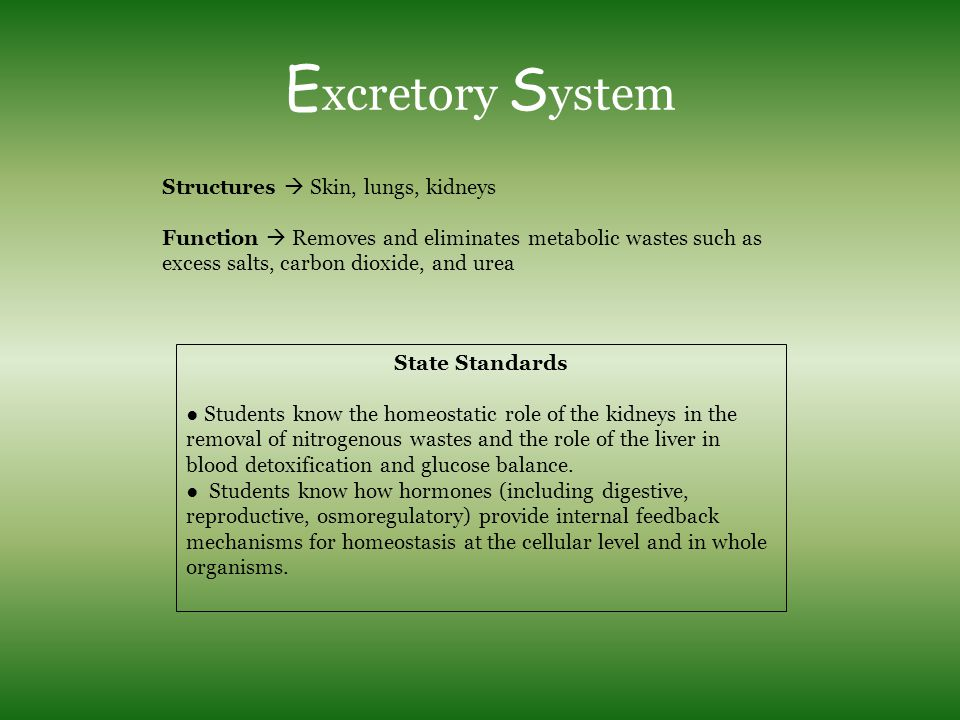 E xcretory S ystem Structures  Skin, lungs, kidneys Function  Removes and eliminates metabolic wastes such as excess salts, carbon dioxide, and urea