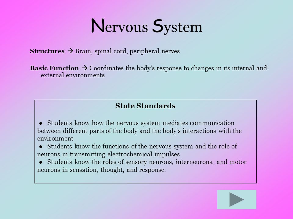 N ervous S ystem Structures  Brain, spinal cord, peripheral nerves Basic Function  Coordinates the body's response to changes in its internal and ex