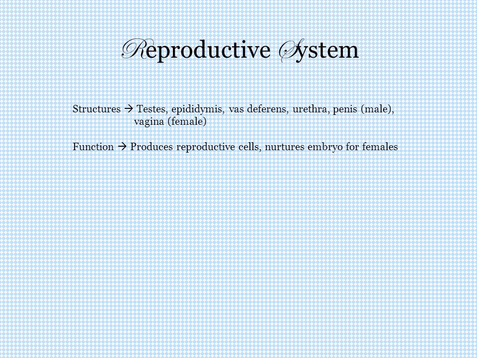 R eproductive S ystem Structures  Testes, epididymis, vas deferens, urethra, penis (male), vagina (female) Function  Produces reproductive cells, nu