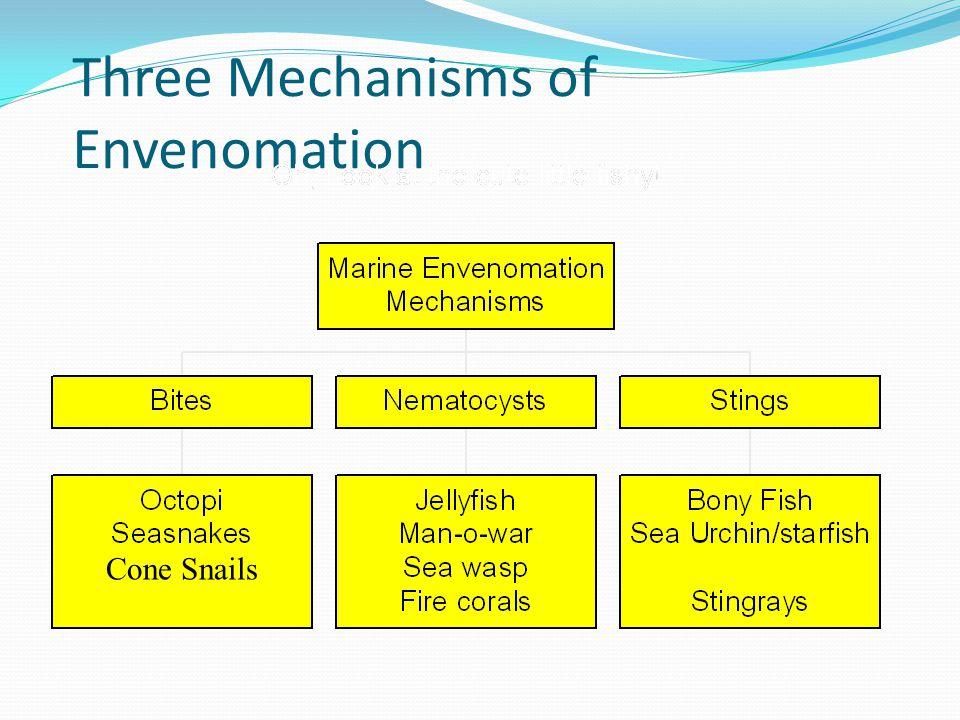 Three Mechanisms of Envenomation Cone Snails