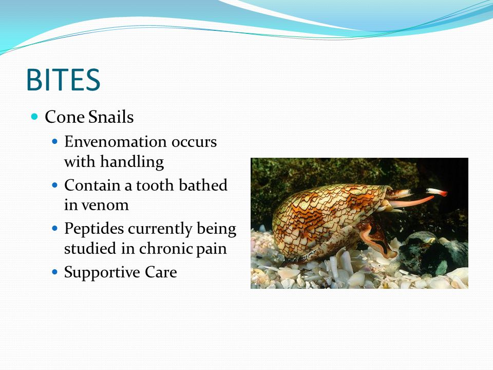 BITES Cone Snails Envenomation occurs with handling Contain a tooth bathed in venom Peptides currently being studied in chronic pain Supportive Care