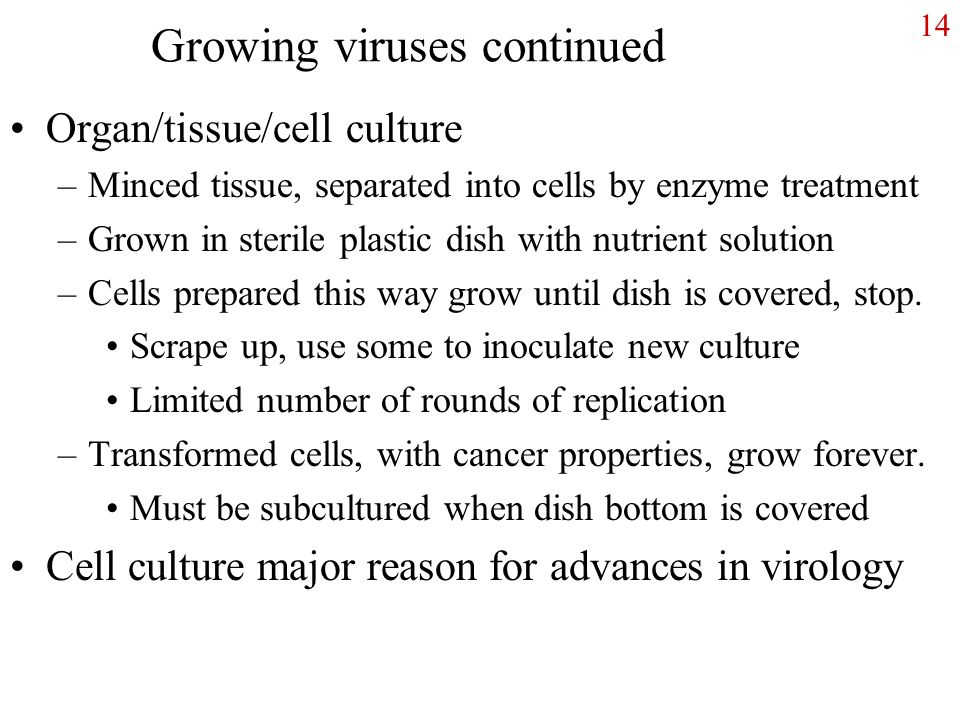 14 Growing viruses continued Organ/tissue/cell culture –Minced tissue, separated into cells by enzyme treatment –Grown in sterile plastic dish with nutrient solution –Cells prepared this way grow until dish is covered, stop.
