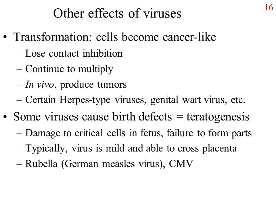 16 Other effects of viruses Transformation: cells become cancer-like –Lose contact inhibition –Continue to multiply –In vivo, produce tumors –Certain Herpes-type viruses, genital wart virus, etc.