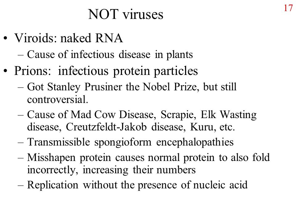 17 NOT viruses Viroids: naked RNA –Cause of infectious disease in plants Prions: infectious protein particles –Got Stanley Prusiner the Nobel Prize, but still controversial.