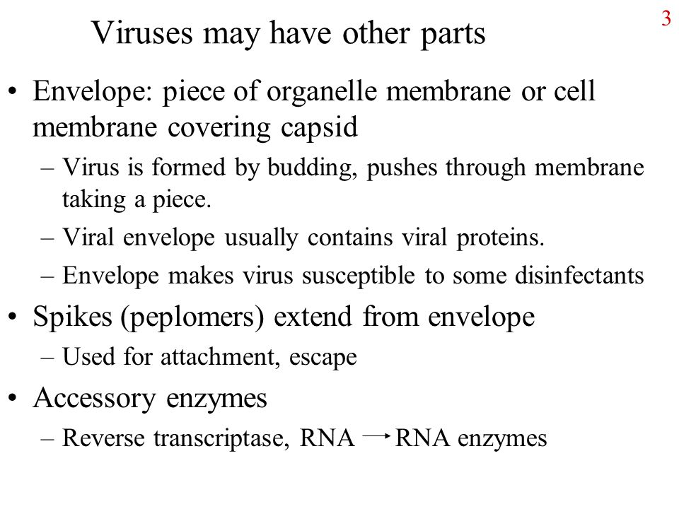 3 Viruses may have other parts Envelope: piece of organelle membrane or cell membrane covering capsid –Virus is formed by budding, pushes through membrane taking a piece.