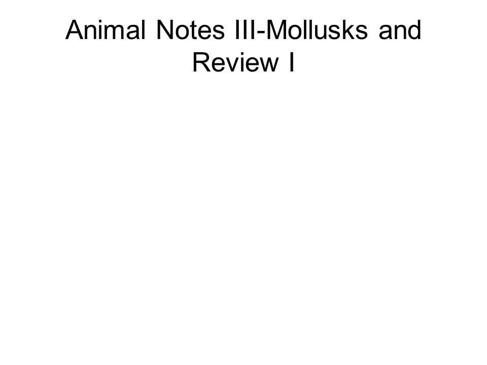 Animal Notes III-Mollusks and Review I