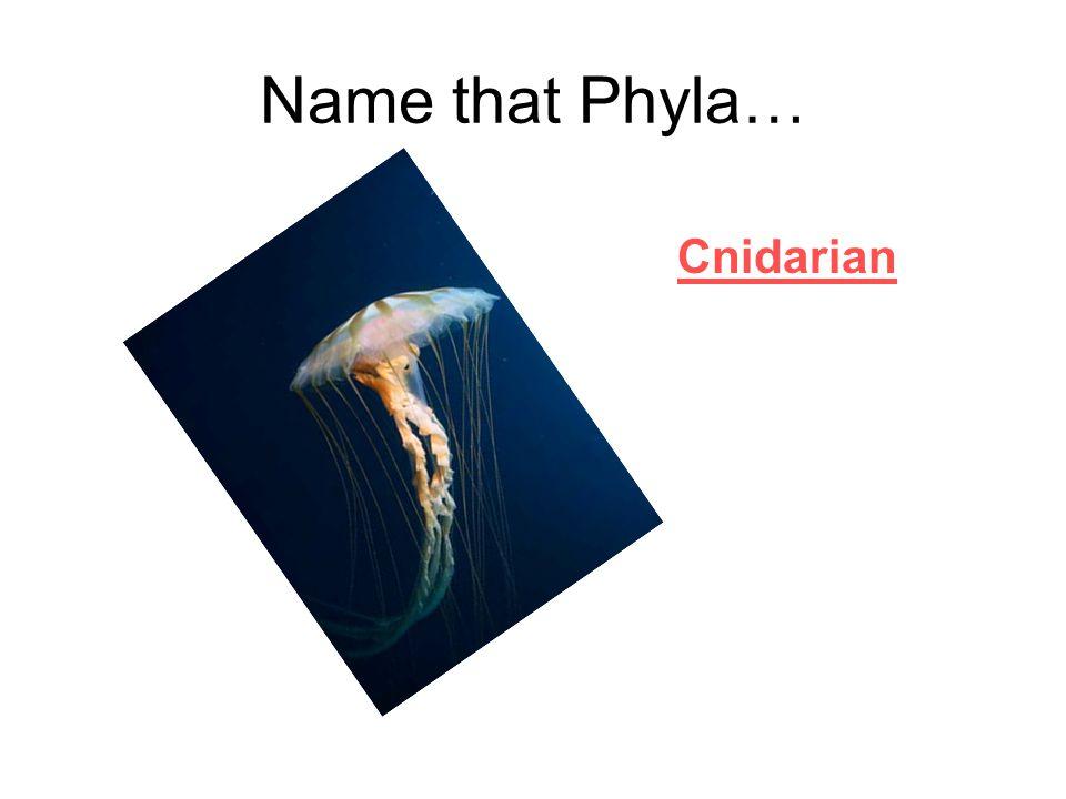 Name that Phyla… Porifera