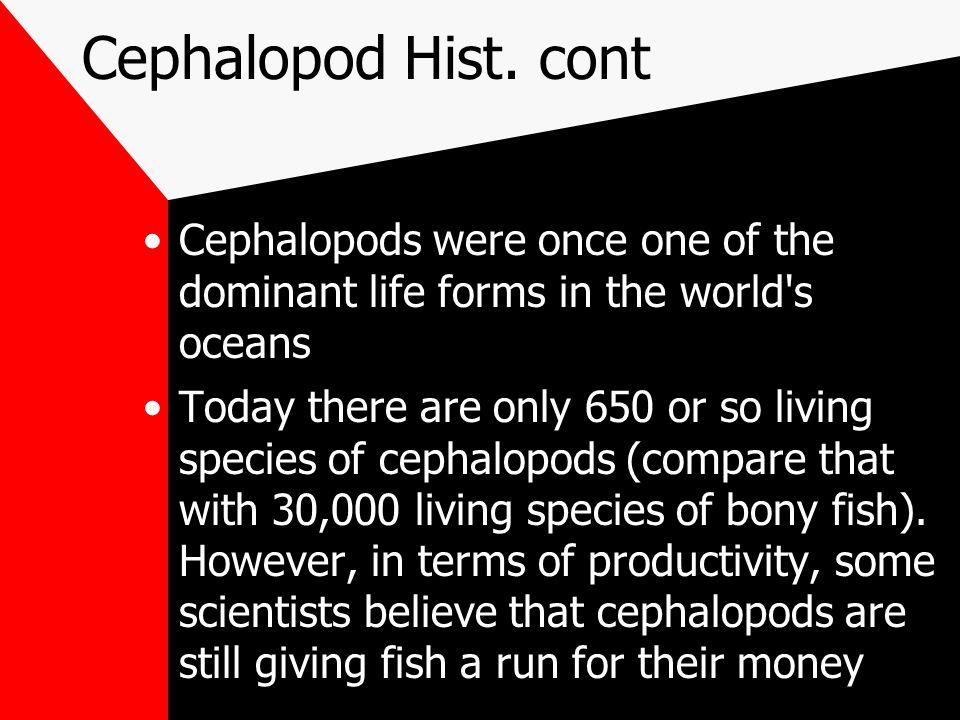 Cephalopod Hist.