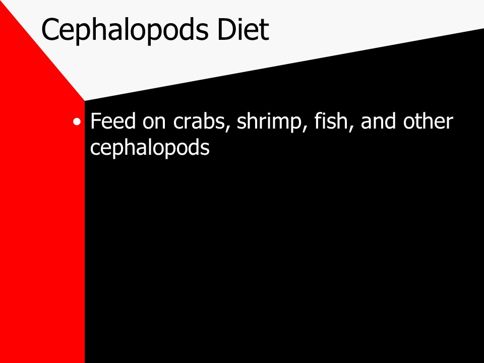 Cephalopods Diet Feed on crabs, shrimp, fish, and other cephalopods