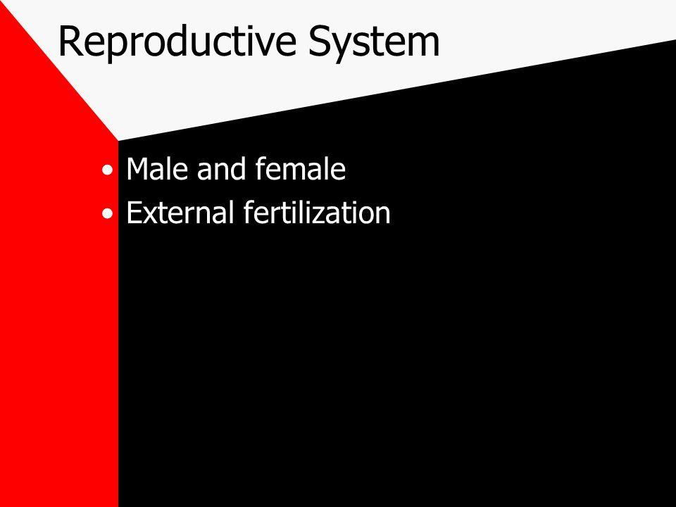 Reproductive System Male and female External fertilization
