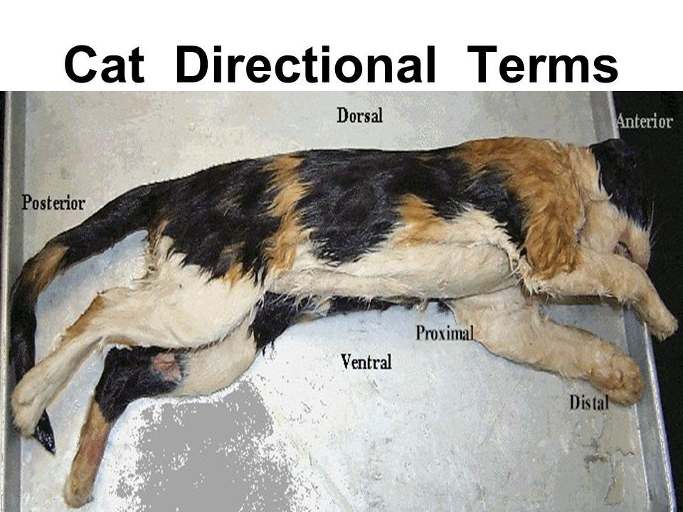 Cat Directional Terms