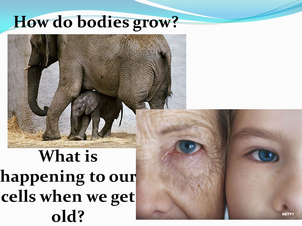 How do bodies grow? What is happening to our cells when we get old?