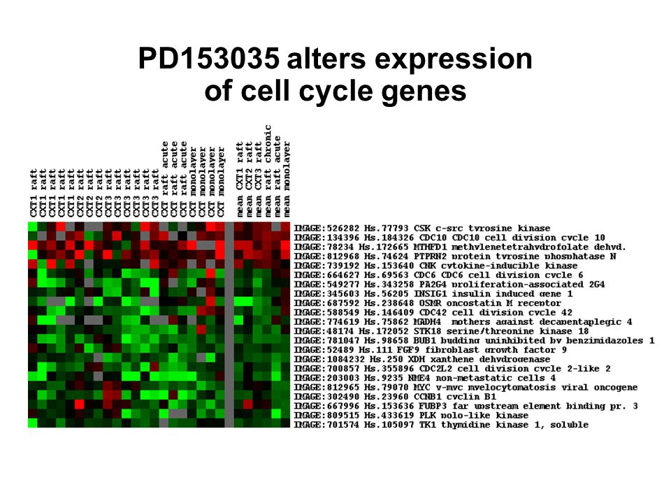 PD153035 alters expression of cell cycle genes