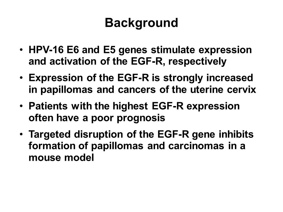 HPV-16 E6 and E5 genes stimulate expression and activation of the EGF-R, respectively Expression of the EGF-R is strongly increased in papillomas and cancers of the uterine cervix Patients with the highest EGF-R expression often have a poor prognosis Targeted disruption of the EGF-R gene inhibits formation of papillomas and carcinomas in a mouse model Background