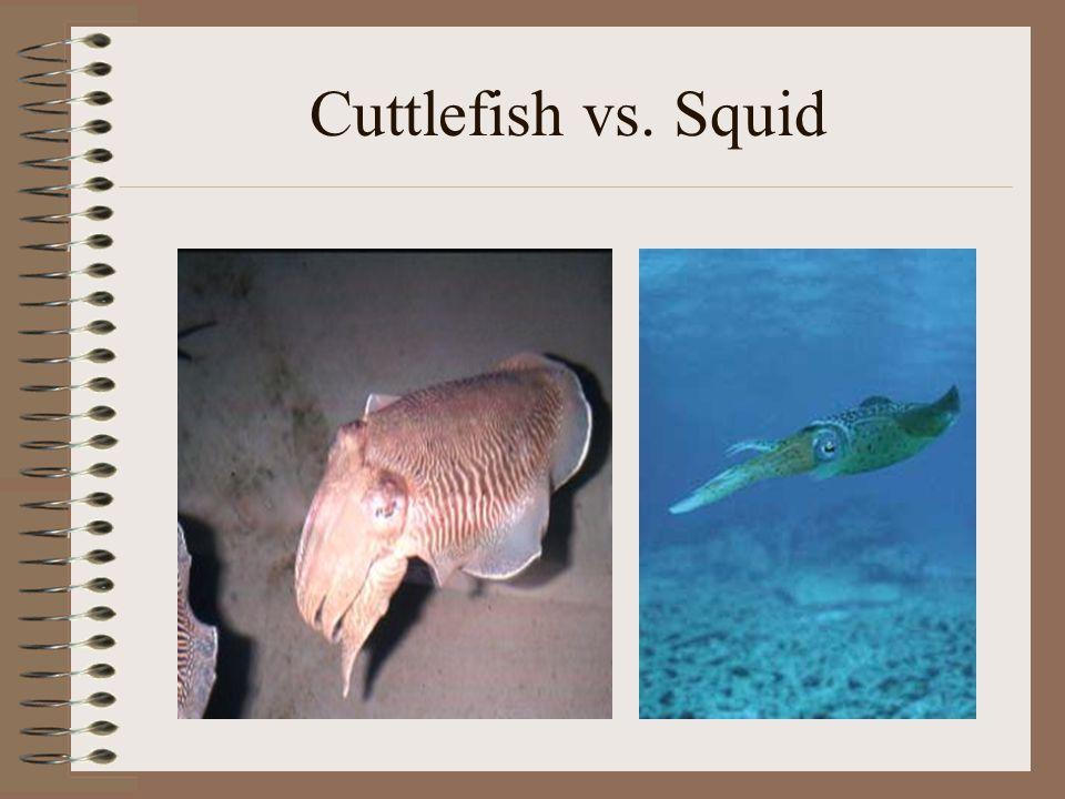 Cuttlefish vs. Squid