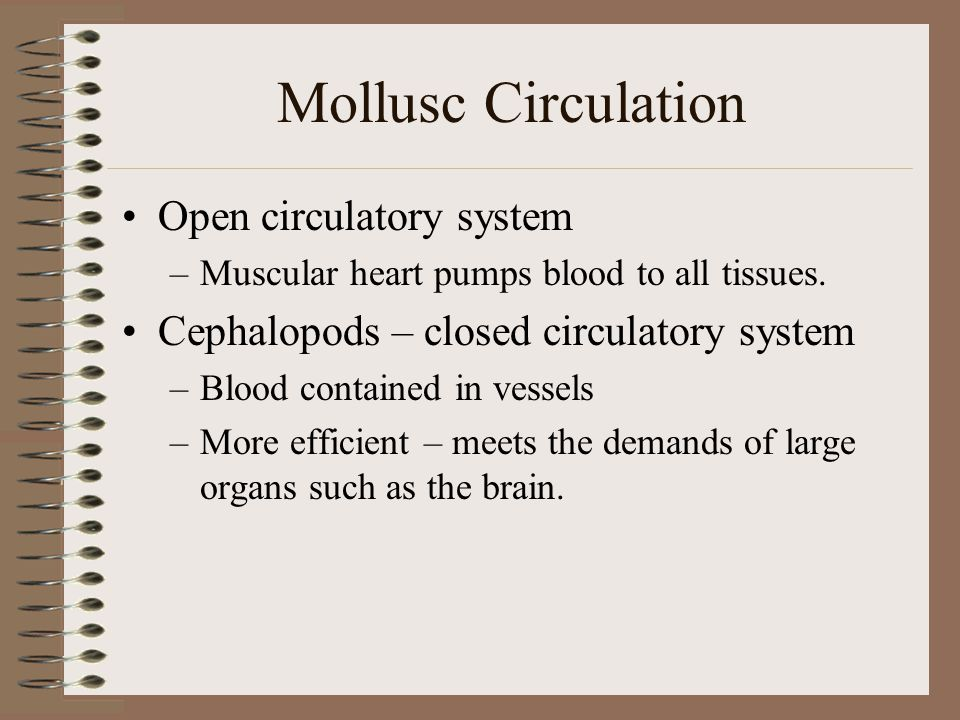 Mollusc Circulation Open circulatory system –Muscular heart pumps blood to all tissues. Cephalopods – closed circulatory system –Blood contained in ve