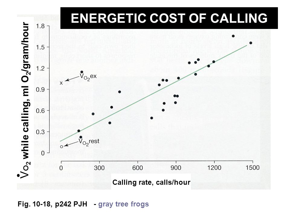 Fig. 10-18, p242 PJH - gray tree frogs Calling rate, calls/hour V O 2 while calling, ml O 2 /gram/hour ENERGETIC COST OF CALLING